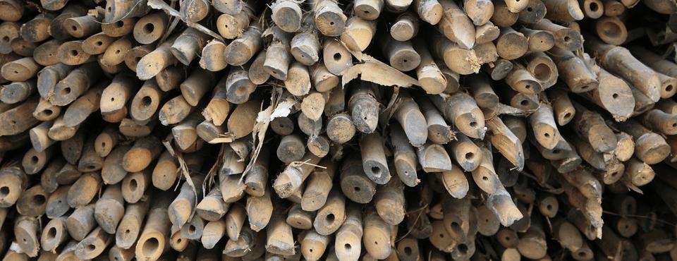 BambooStalks