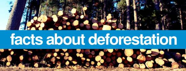Learn About Deforestation