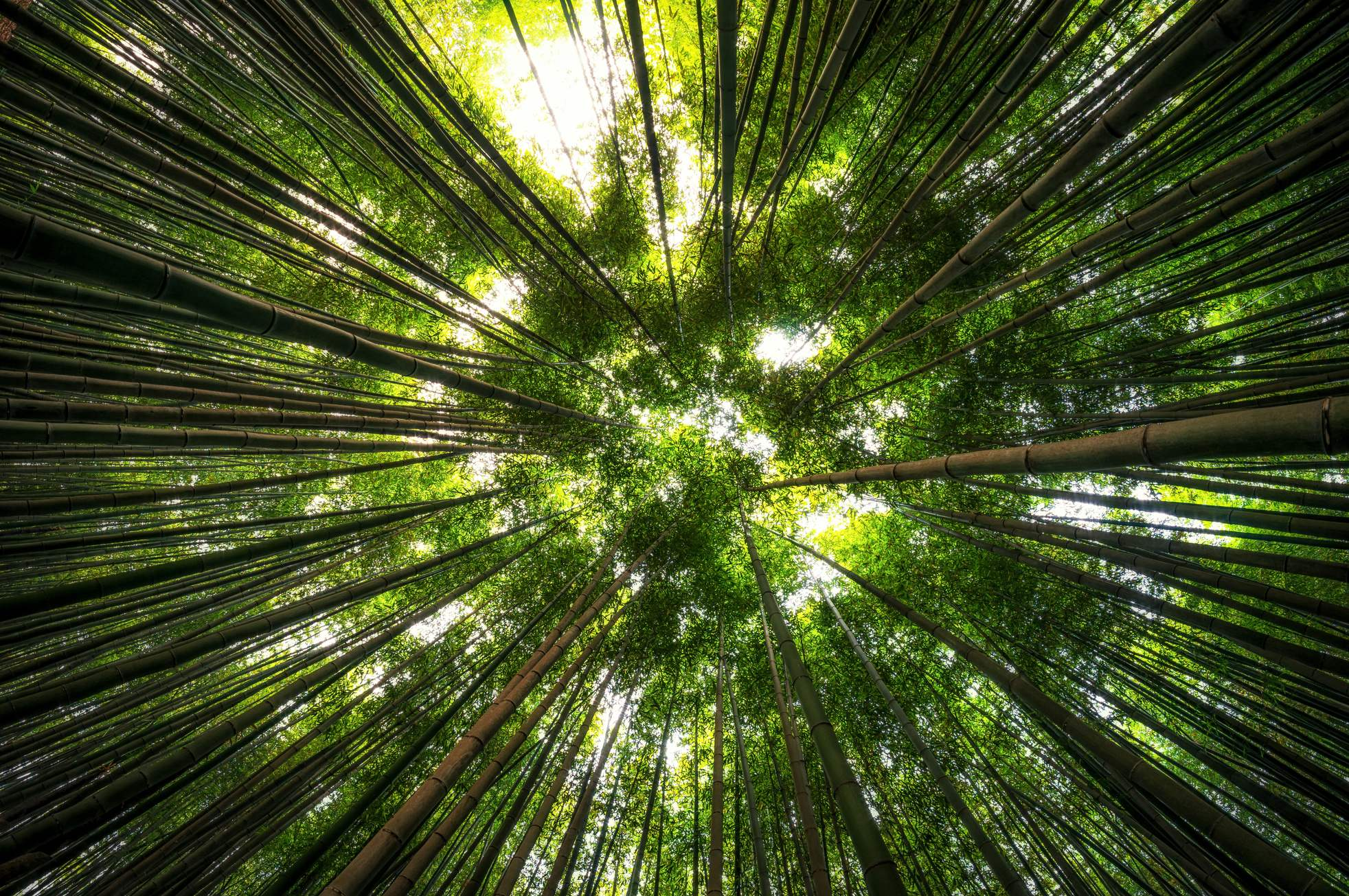 Bamboo Industry - Hypnotized