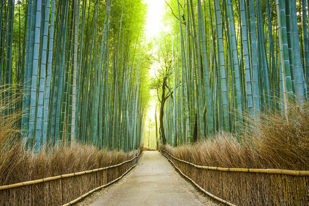 Bamboo Forest Travel