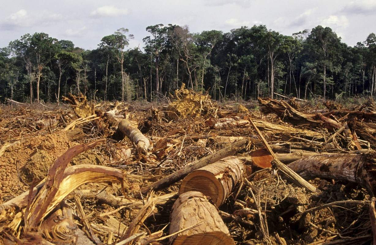 danger of deforestation essay