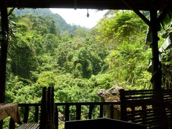 jungle-lodge-view