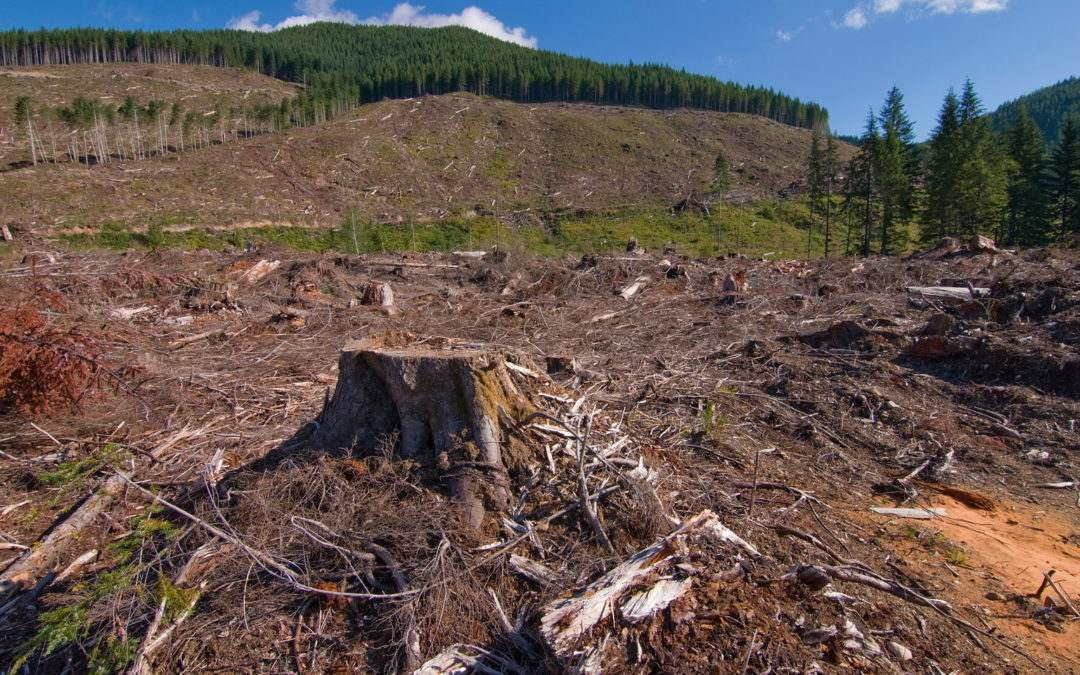 Rainforest Destruction Photo Gallery