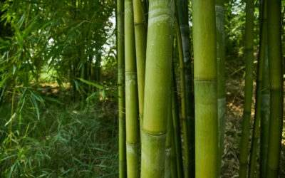 Getting to Know Bamboo, Mother Earth's Friend